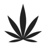 icone for hemp cannabis oil